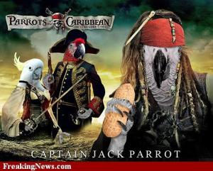 Parrots of the carribean